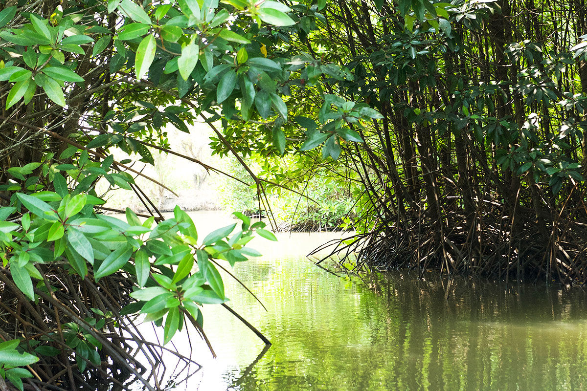 Farm mangroves